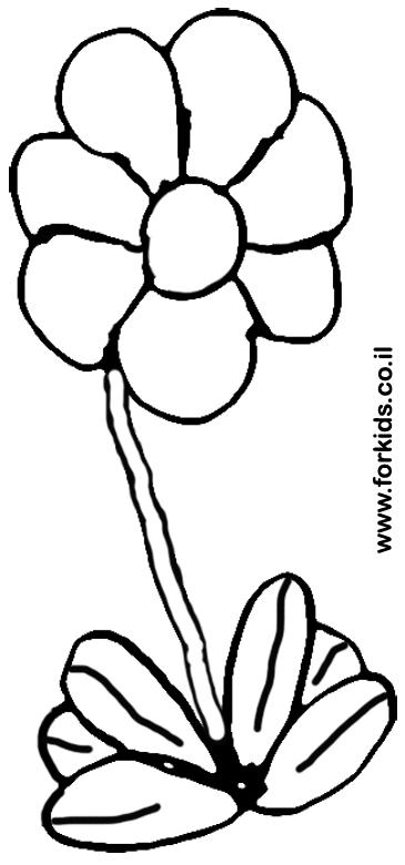פרח פשוט לצביעה