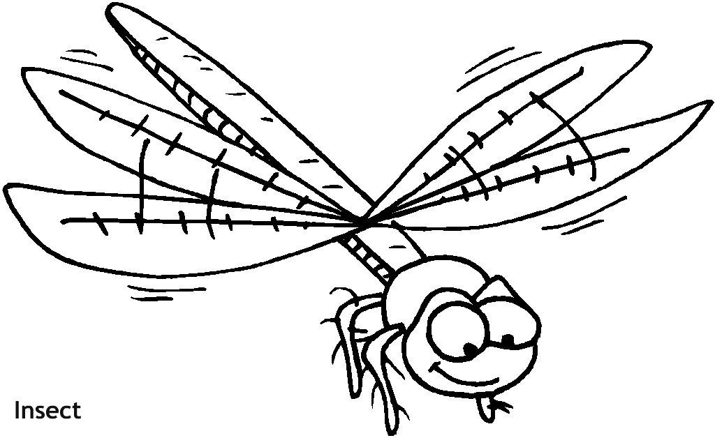 חרק מעופף לצביעה